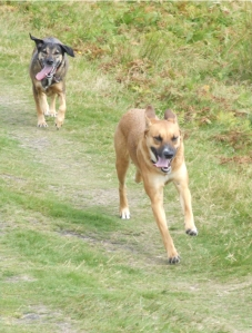 The Celtic Terrors at Bradgate Park