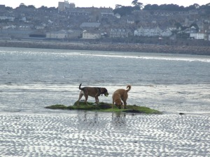 With Penzance as a backdrop - Long Rock beach at low tide.
