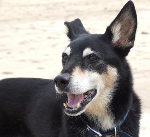 Max at the Beach